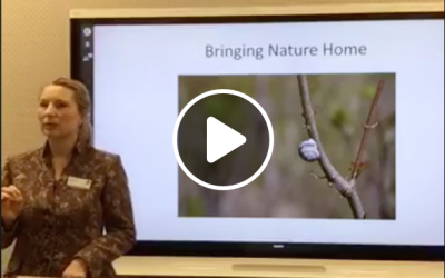 Video: Re-Wilding for Our Future