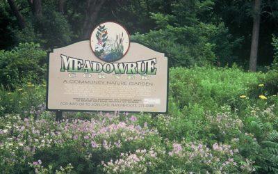 Stratford's Meadowrue: Inspired Urban Re-Wilding