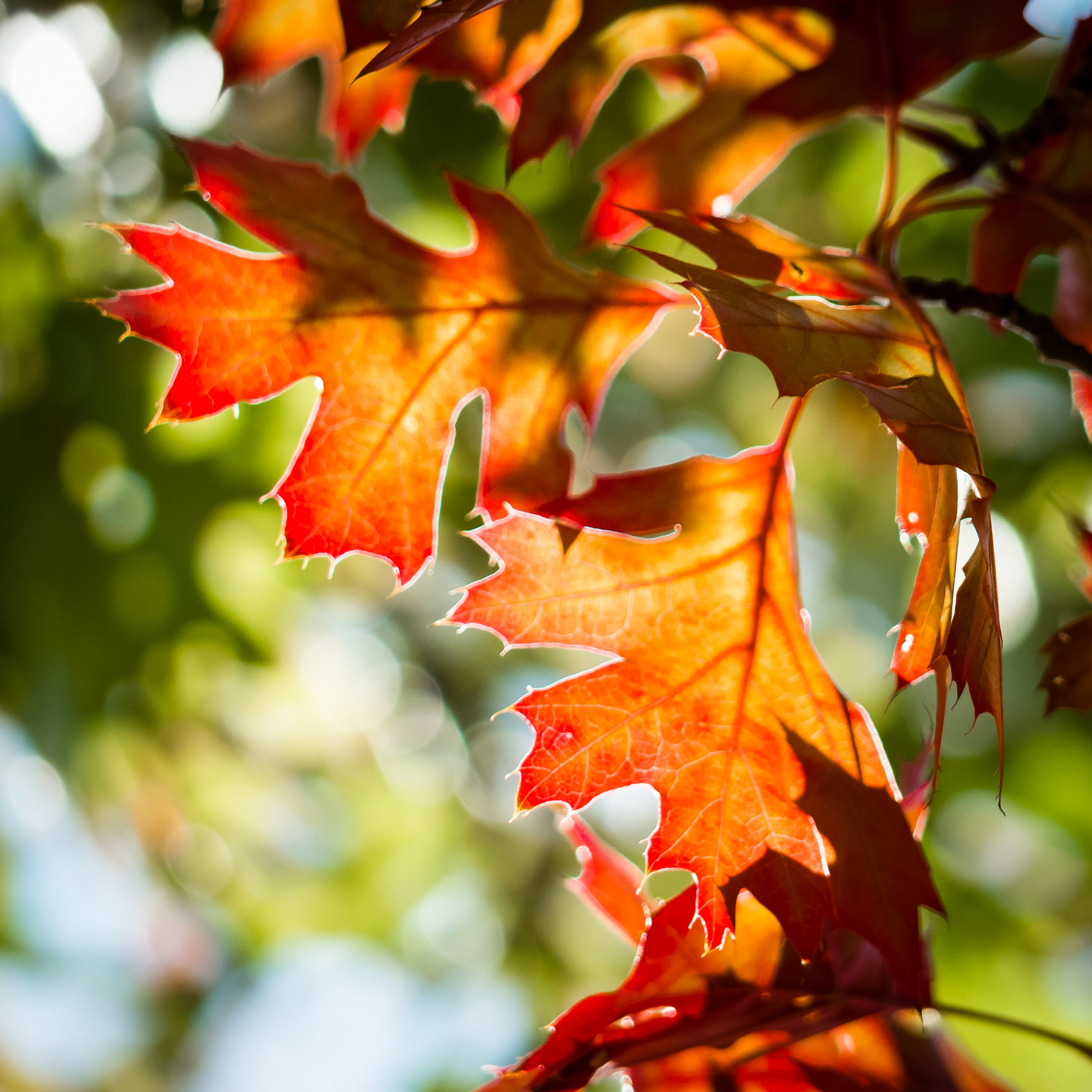 autumn leaves in the sun