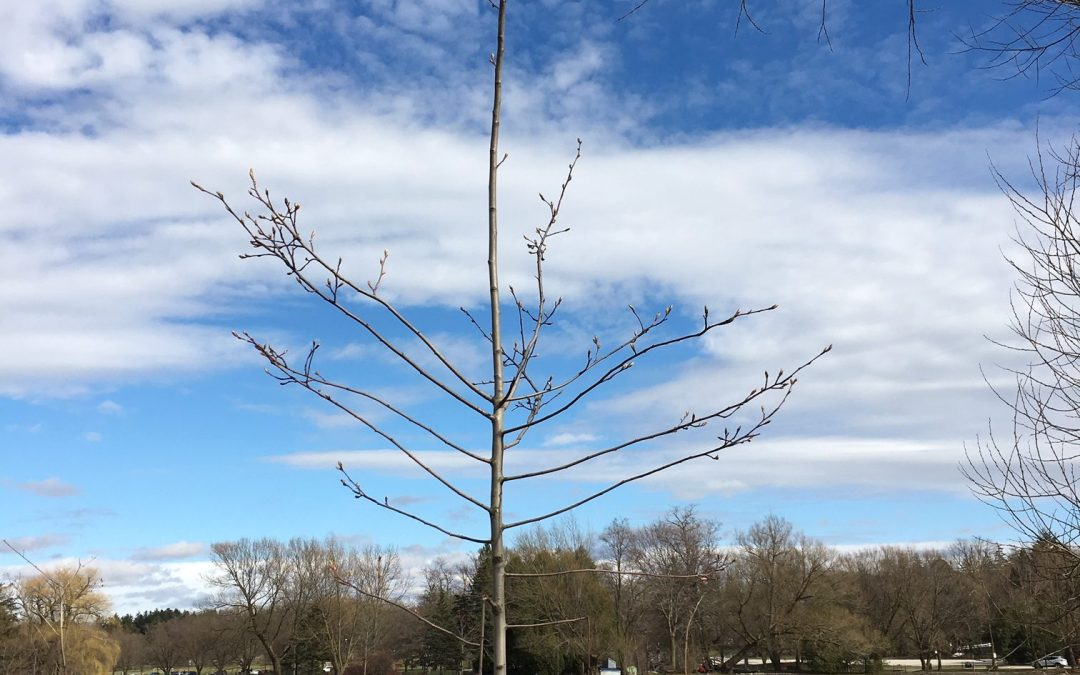 The Forest & The Trees: UTRCA Set to Plant 50,000 Trees in 2019