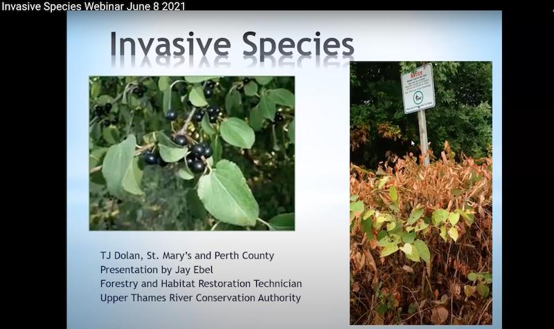 Video: Invasive Plant Species